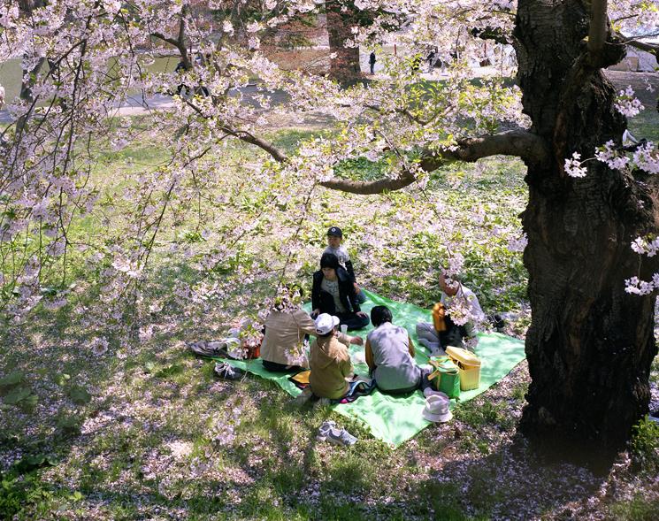 KanekoHiroyo_picnics18
