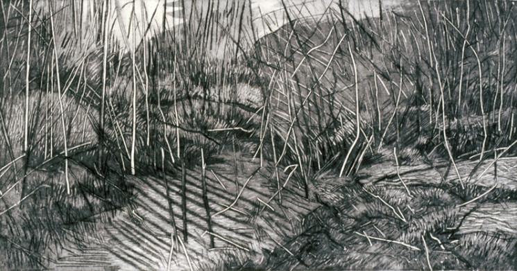 Westerman.donna.twig_forest.2007.etching.922x1722.